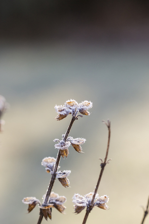 sub zero: Close up of layer of frost covering little green leaves on tree branch in early morning Stock Photo