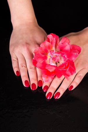 u�as pintadas: Tema del balneario de cerca sobre la parte superior de las manos bastante bajo hermosa flor roja sobre fondo negro con espacio de copia