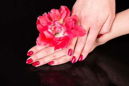 u�as pintadas: Spa theme close up over top of pretty hands under beautiful red flower over black background with copy space Foto de archivo