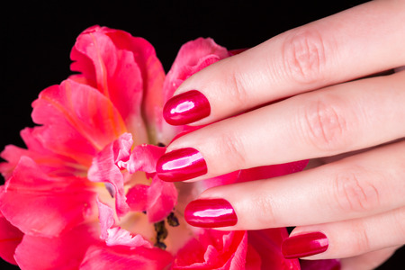 Spa theme close up over top of pretty hands under beautiful red flower over black background with copy space Stock Photo