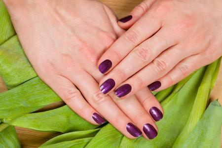 uñas pintadas: Mujer mostrando sus uñas cuidadas púrpura sobre una capa de tulipán hojas verdes frescas se ve desde arriba en un concepto de belleza Foto de archivo