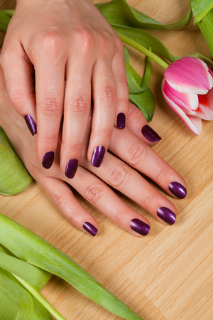 painted toenails: Woman displaying her purple manicured fingernails over a layer of fresh green tulip leaves viewed from above in a beauty concept Stock Photo