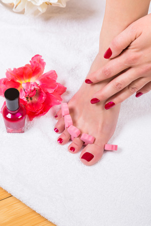 Woman with manicured fingernails painting her toenails with red varnish from a bottle in a beauty concept, close up on her hands and feet and a fresh red tulip alongside Stock Photo