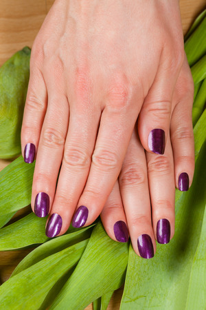 uñas pintadas: Woman displaying her purple manicured fingernails over a layer of fresh green tulip leaves viewed from above in a beauty concept Foto de archivo