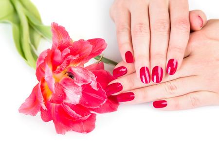 uñas pintadas: cosméticos del tema de las manos con la flor roja con sutil sombra sobre el fondo blanco Foto de archivo
