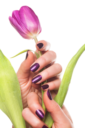 Sensual hands with painted fingernails holding purple tulip flower and green leaves over white background