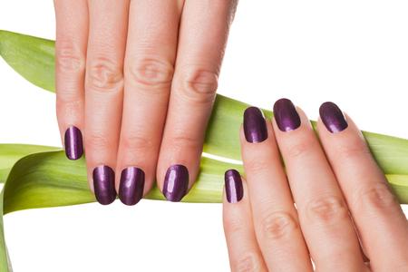 uñas pintadas: vista lateral aislada cerca de las manos con las uñas la celebración de púrpura largo tallo de la flor verde sobre fondo blanco