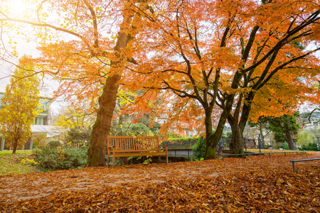 Rustic wooden bench under colorful autumn trees in Lichtentaler Allee park on the River Oos in Baden-Baden, Germany with the glowing warmth of the sun