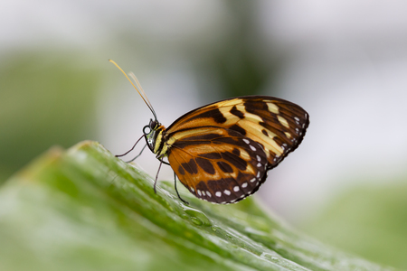 Colorful orange butterfly perched on a windowsill sunning itself in a close up side view with copy space
