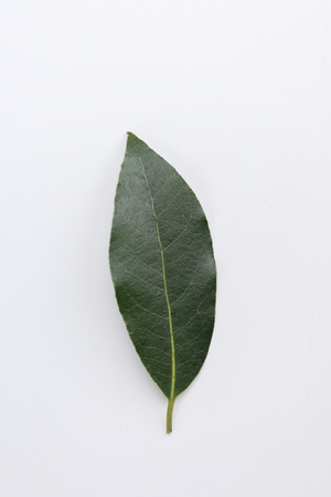 Single fresh laurel or bay leaf on a white, an aromatic culinary herb used as a seasoning in cooking Archivio Fotografico - 120877423