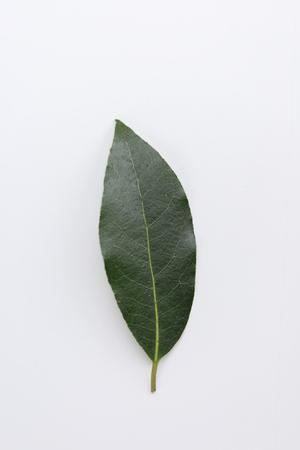 Single fresh laurel or bay leaf on a white, an aromatic culinary herb used as a seasoning in cooking Zdjęcie Seryjne