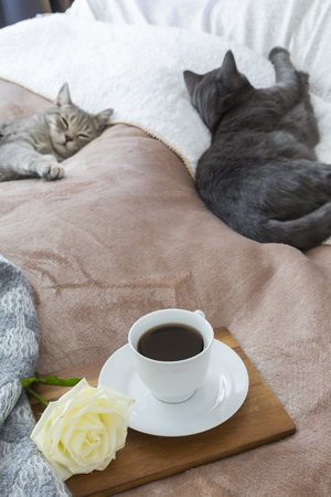High angle view of cats resting by coffee and rose in bed at home