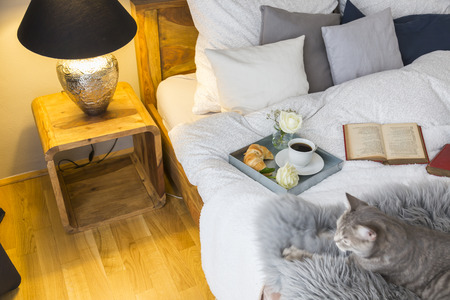Cute tabby cat looking up while lying by open book on bed by glowing lamp at home Stockfoto