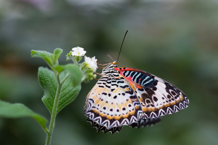 beautiful butterfly closeup in nature outdoor closeup Archivio Fotografico - 120877434