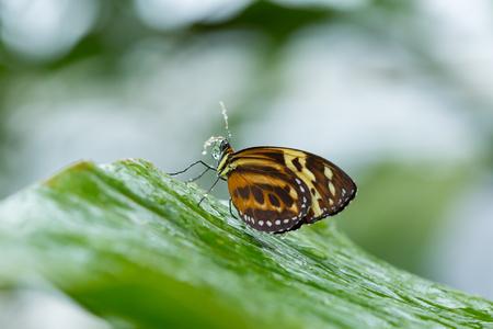 Side view of butterfly on green leaf in garden.