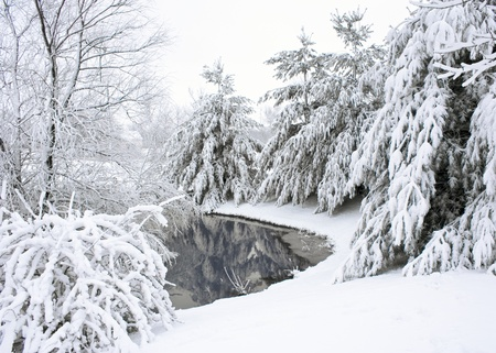 Trees around a pond, covered with snow Stok Fotoğraf