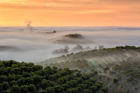rolling landscapes: Fog in the country