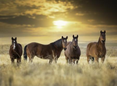 New Mexico Horses Stockfoto