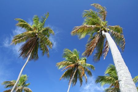 Giant palm trees on a deserted tropical island photo