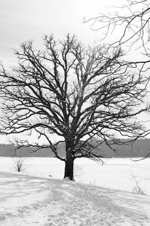 Winter tree Banco de Imagens