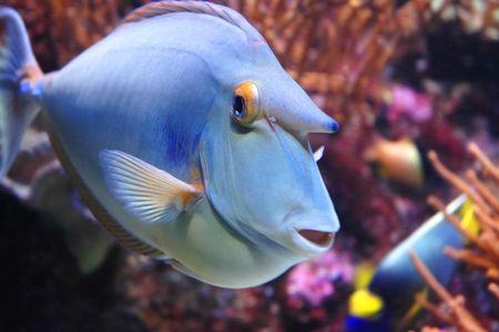 vividly: Closeup - Marine Fish