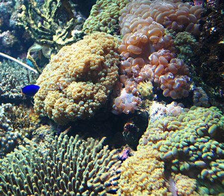 vividly: Marine Fishes Stock Photo