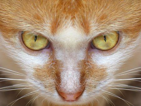 feature: Closeup of Cats Facial Feature Stock Photo