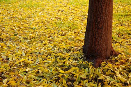 Leaves on the ground as autumn approach photo