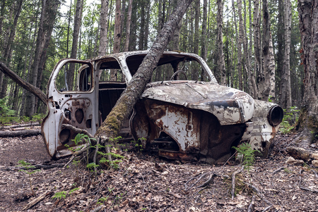 Old Car Abandoned in a birch forest. The vehicles is in extremely poor state, its rotting, rusted and interior completely stripped.