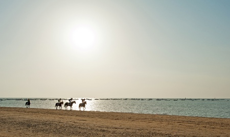 Racing horses on a beach at sunset, Spain photo