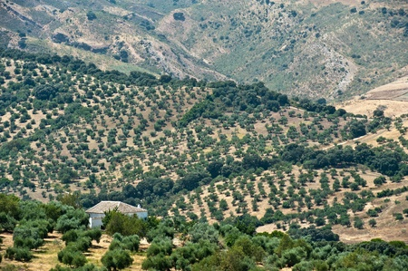 Farm between olive trees, Spain photo