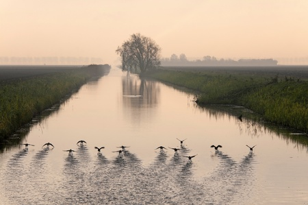 Birds cleared for take off at dawn, Holland