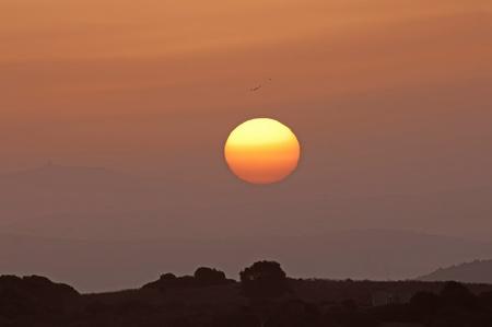 Flying birds at sunrise, Spain Stock Photo - 11372315