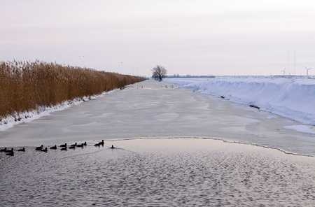Birds swimming in an ice hole, Holland, Europe Stock Photo - 11372334