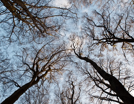 Silhouette of trees seen from below photo