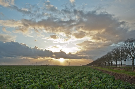 Cloudscape and sunbeams over green vegetables, Holland, Europe photo