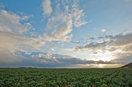 Cloudscape and sunbeams over green vegetables, Holland, Europe Stock Photo - 11596621