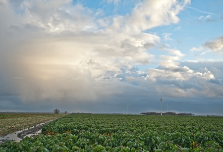 Cloudscape over green vegetables, Holland, Europe photo