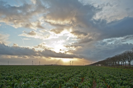 Sunbeams over green vegetables, Holland, Europe photo