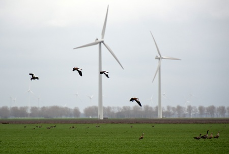 Green energy and flying birds photo