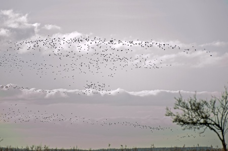 Birds flying over nature in winter photo