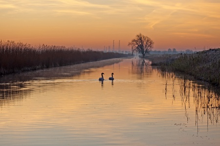 Swans swimming in a canal at sunrise photo