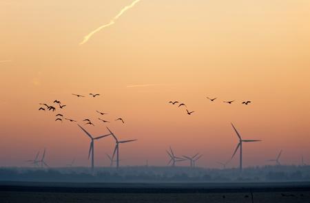 Sunrise over flying birds in winter