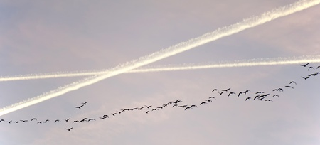 Birds flying in winter photo