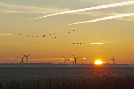 Flying birds at dawn in winter photo