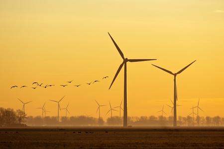 Wind energy and flying birds at sunrise photo