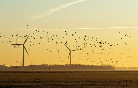 Wind energy and flying birds at sunrise photo