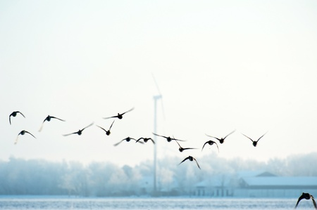 Flying birds in winter