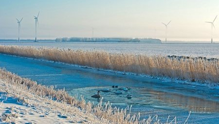 ice dam: Birds in an ice hole along a dam Stock Photo