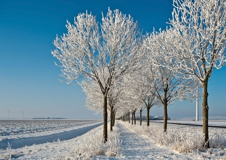 White trees under a blue sky in winter photo